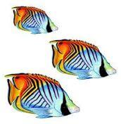 aqua decals tropical fish