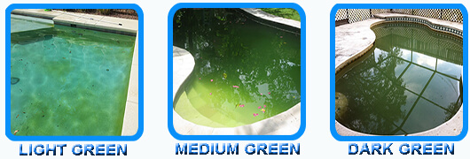 Pool shock shocking for algae removal intheswim pool blog - How long after pool shock before swim ...
