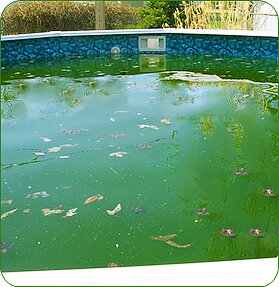 Don 39 t close your pool green intheswim pool blog - Opening a swimming pool after winter ...