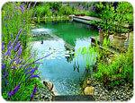 4 Earth Friendly Alternative Pool Water Treatments Intheswim Pool Blog