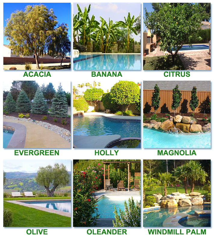 best worst trees to plant around a pool intheswim pool