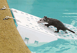Pool Safety Exit Ramps for pets and wild animals