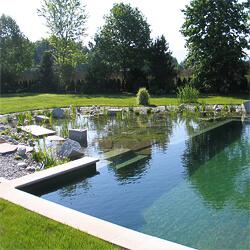 natural-pool-with-natural-filtration-bed-adjacent