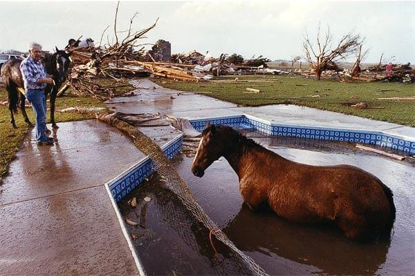horse-in-pool-tornado