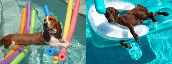 dogs-on-pool-floats