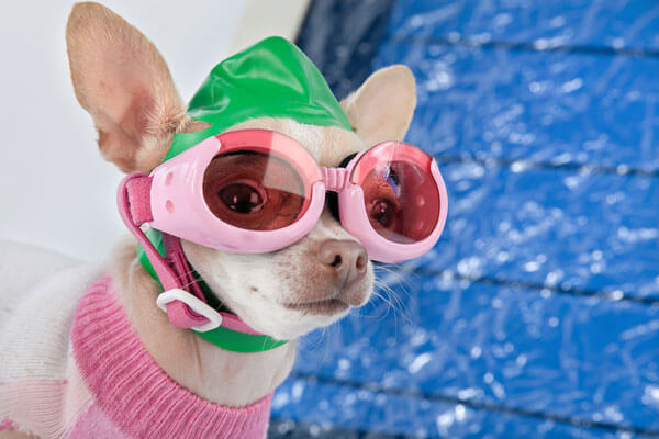 Dogs In Pools Pros And Cons Intheswim Pool Blog