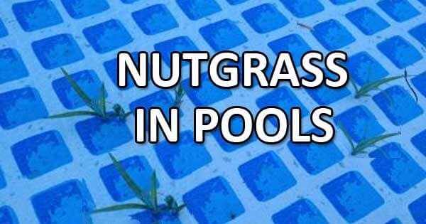 Nutgrass Problems In Vinyl Pools Intheswim Pool Blog
